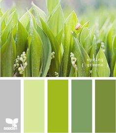 Grüne Palette des Frühlingsfarbtyps: Maigrün (Farbpassnummer 29) - Sonnengelb (Farbpassnummer 13) - Helles Lindgrün bis Mint (Farbpassnummer 15) Kerstin Tomancok Farb-, Typ-, Stil & Imageberatung