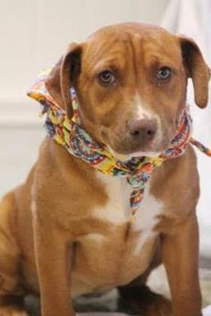 ADOPTED> Rescue groups- Advised Adopter only  NAME: Grace  ANIMAL ID: 30942811