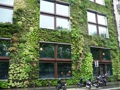 Jargon Watch: Vertical Gardens vs Vertical Farms vs Living Walls vs Green Façades : TreeHugger