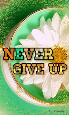 Never give up   Daisy