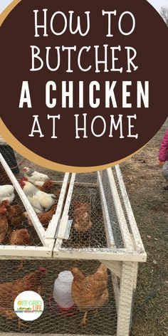 Learn everything about how to get started raising and butchering chickens at home. - How to Butcher a Chicken at Home Urban Chickens, Meat Chickens, Raising Chickens, Chickens Backyard, Chicken Garden, Chicken Feed, Chicken Runs, Chicken Coops, Homestead Farm