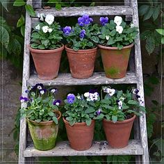 Mabel & Rose offer a hand-picked range of vintage garden accessories including tin baths, enamelware, terracotta pots, apple crates, and watering cans. Back Gardens, Outdoor Gardens, Pot Jardin, Garden Studio, Container Flowers, Garden Structures, Terracotta Pots, Garden Accessories, Garden Planning
