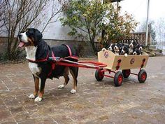 Dog Pulls Puppies In A Cart