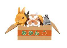 Bunnies in a box