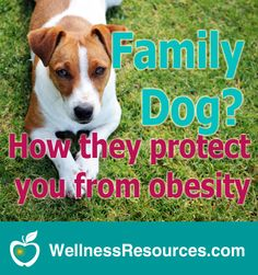 A recent study found infants exposed to furry pets were less likely to be obese in childhood. Discover the connection.