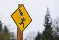 Hat-Stealing Attack Owl In Oregon Officially Named 'Owlcapone', SALEM, Ore. (AP) — MSNBC host Rachel Maddow inspired Oregon's capital to post new warning signs in a park where four runners reported attacks from an angry owl Articles For Kids, Salem Oregon, Oregon City, New Sign, Pacific Northwest, North West, State Parks, Awesome, Warning Signs