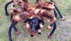 Il transforme son chien en araignée géante pour faire peur aux passants