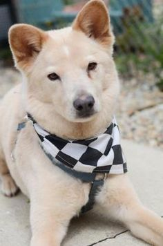 5 / 3 ***SENIOR*** Petango.com – Meet Cash, a 8 years Shepherd / Mix available for adoption in INDIANAPOLIS, IN Address 7929 N Michigan Road, INDIANAPOLIS, IN, 46268 Phone (317) 872-5650 Website http://www.indyhumane.org Email Customerservice@indyhumane.org