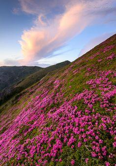 Clouds along the Mountains Ciucas, Nature, Landscape. Beautiful Sky, Beautiful World, Landscape Photos, Natural World, Flower Power, Wild Flowers, Tourism, Nature Photography, Scenery
