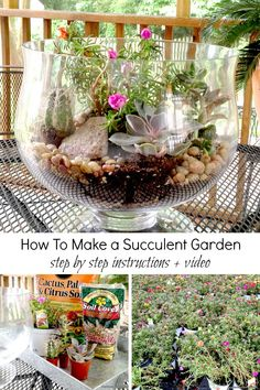 DIY Projects: Step by Step Tutorial with Video on How To Make a Succulent Garden for your Home. These mini gardens are fun to enjoy inside when everything is dead outside.