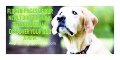 One stop shop for Pup Worries! - Dog Training Tips - Everything About Dog Training Basic Dog Training, Dog Training Videos, Dog Training Tips, No Worries, Labrador Retriever, Puppies, Pets, Shop, Animals