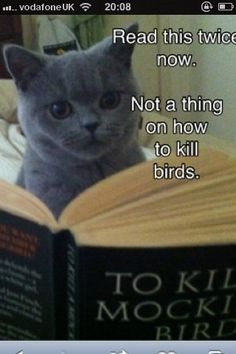 """""""To Kill a Mockingbird""""  (note to cats:  this is NOT a """"how to"""")"""