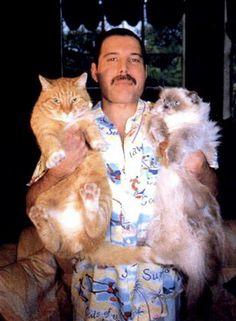 freddie mercury + cats