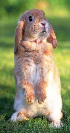Rabbit love?: