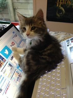 Funny pictures about Kitten's Best Place To Lay Down. Oh, and cool pics about Kitten's Best Place To Lay Down. Also, Kitten's Best Place To Lay Down photos. Cute Baby Animals, Animals And Pets, Funny Animals, Cute Kittens, Cats And Kittens, Image Chat, Photo Chat, Cat Aesthetic, Funny Cat Pictures