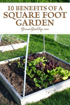 Building square foot garden beds and filling with quality soil gives you an immediate advantage over a regular garden because you are starting out with soil that is rich in nutrients and organic matte Vegetable Garden Planner, Raised Vegetable Gardens, Vegetable Garden For Beginners, Gardening For Beginners, Raised Garden Beds, Vegetable Gardening, Veggie Gardens, Raised Beds, Organic Vegetables