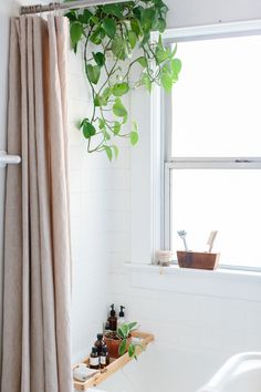 Bathroom. Portland house plants series by Luisa Brimble.
