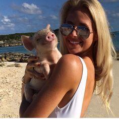 The swimming pigs island- Exuma, Bahamas