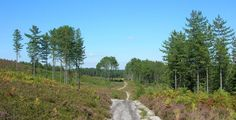 Walk or cycle through heathland and forest by Morden Bog National Nature Reserve: one of the largest valley mire habitats in England. Forest Bathing, Nature Reserve, Northern Ireland, Great Britain, Habitats, Things To Do, Places To Visit, England, Country Roads
