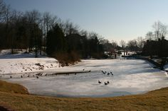 The perfect migration has no issues. That said, there is nothing that even partially resembles perfection. Even, the ice on the pond. It never, ever froze all the way over. Is that a failure of the ice, a distrubance caused by swimming geese or simply reality?