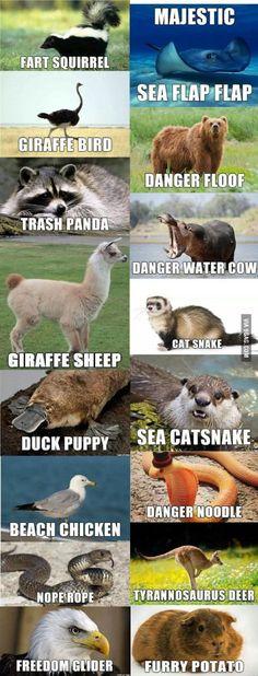 If I had to name some animals. Hahaha!