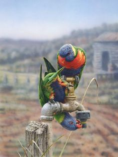 Greg Postle, Drip from Kingfisher Art And Framing - Buy Online Beautiful Birds, Animals Beautiful, Cute Animals, Australian Animals, Australian Artists, Australian Bush, Funny Birds, Colorful Birds, Colorful Parrots