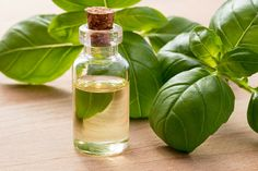 13 Health Benefits of Basil Oil + Side Effects - Selfhacked