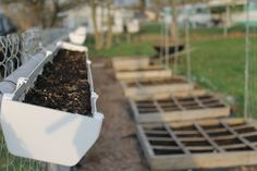 growing lettuce and spinach in gutters!