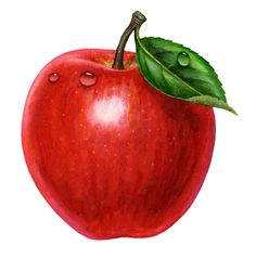 Red Delicious Apple With Leaf Images Apple Picture, Fruit Picture, Apple Painting, Fruit Painting, Strawberry Pictures, Apple Illustration, Watercolor Fruit, Fruit Photography, Edible Arrangements