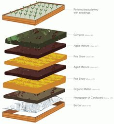 ... stems and then water well; Replace mulch, manure and compost every quarter. Water your veggies for longer periods less often rather than a daily light ...