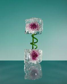 Freezing Flowers by Paloma Rincón