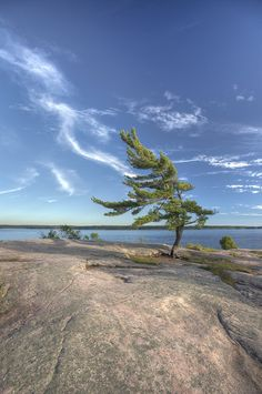 Iconic lonely windswept pine tree at killbear, High Dynamic Range process Big sky, with lazy clouds, water and that great rock of the exposed canadian shield. Landscape Photos, Abstract Landscape, Rainbow Eucalyptus Tree, Lord Murugan Wallpapers, Pine Tree Tattoo, Algonquin Park, Canoe Trip, Tree Photography, Photo Tree