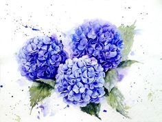 Hydrangea in watercolor on Behance