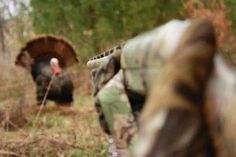 Turkey Hunting!!                                                       …