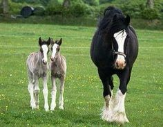 The rare beauty of twin horses. It's unusual for them to survive after birth and its great when they do, it's an amazing and rare sight
