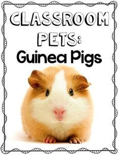 Guinea Pig Classroom Pet Pack:Have guinea pigs in your classroom? Maximize the learning potential of your pet center with this pack! It includes lots of fun activities to get your students interested in your classroom pets and take the center from uninspiring to inviting with tie ins to Writing, Math and Science! Includes:thematic word wall cards, caretaker's check sheet, guinea pig diagram poster and b&w student copy, observation sheets, All About Guinea Pigs emergent reader, and so much…