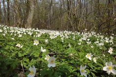erdei virágok képek - Google keresés