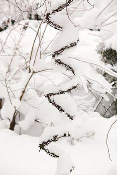 Tee se itse -ideoita puutarhaan ~ DIY garden ideas: Piikkilanka ~ Barbed wire
