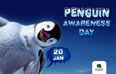 Penguin Awareness Day, and World Penguin Day are great opportunities to learn about and appreciate one of the few natives of Antarctica. But you don't have to wait until Penguin Awareness Day, because penguins can be loved all year long!