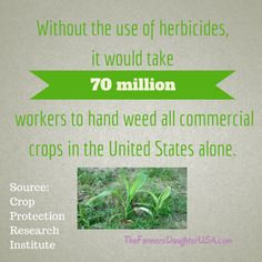 Hand Weeding Commercial Crops