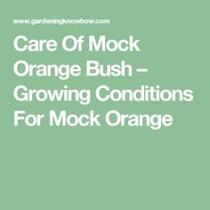 Care Of Mock Orange Bush – Growing Conditions For Mock Orange