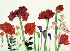 Elizabeth Blackadder Flowers - Amaryllis, Ranunculus and Zantedeschia This composition is well painted and thought through in means of positioning. The colours used are quite bright, bold and contrasting.
