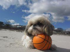 Great dog holidays...