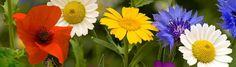 beautiful-flowers-website-headers