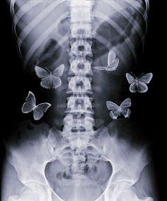 butterflies   via if it's magic ~ Cityhaüs Design