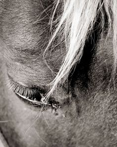 Pet Portraits- Horses  www.kpresecanphotography.com  www.facebook.com/karenpresecanphotography