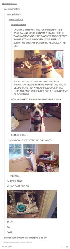Animal Posts On Tumblr That Are Impossible Not To Laugh At - 45 tumblr posts about animals that are impossible not to laugh at