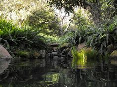 Ponds and waterfalls mediterranean landscape #DuckPond