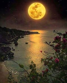 Image may contain: night, sky, plant, outdoor, nature and water Moon Moon, Moon Art, Full Moon, Moon Photos, Moon Pictures, Nature Pictures, Shoot The Moon, Sky Landscape, Landscape Design