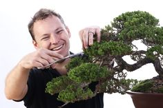 Fun with Bonsai - Bonsai by Antony Smith from Willow Bonsai Store / Bonsai Addicts Club #bonsai #hobby #decorative #tree #photography #canon #canonphoto #protofoto #dalton #dingelstadphotography #throughmylens